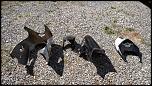 05/06 Kawasaki 636 track bodywork (Sharkskinz)-bodywork4-jpg