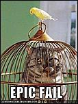 Moe bling fo de tls-funny-pictures-bird-cat-cage